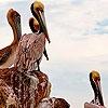 Пазл: Птицы на берегу моря (Herons on the seaside puzzle)