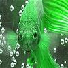 Пятнашки: Жемчужная рыбка (Pearl fish puzzle)
