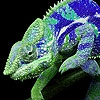 Пазл: Разноцветные ящерки (Colorful lizards puzzle)