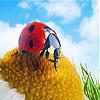 Пятнашки: Божья коровка (Gemma and ladybug slide puzzle)