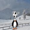 Чеканка с пингвином (Penguin Soccer)