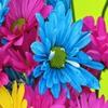 Пазл: Цветы (Jigsaw: Bright Flowers)