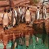 Пятнашки: Пингвины (Penguins in the zoo slide puzzle)
