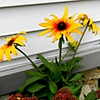 Пазл: Желтый цветок 2 (Jigsaw: Yellow Flower 2)