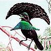 Пятнашки: Птичка (Singer bird slide puzzle)