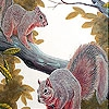 Пятнашки: Белки (Naughty squirrels on the tree slide puzzle)