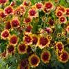 Пазл: Цветочное поле (Jigsaw: Flower Field)