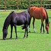 Пазл: Две лошадки (Jigsaw: Two Horses)