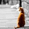 Пазл: Котик (Jigsaw: Red Cat)