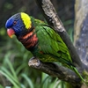Пазл: Попугай (Parrot Puzzle)