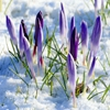 Пазл: Ранняя весна (Jigsaw: Early Spring)