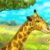 Жираф в зоопарке (Giraffe Zoo)