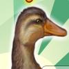 Счастливый утенок (Lucky Duck)