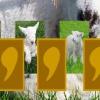 Маленькие ягнята (Little lamb memory)