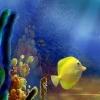 Отличия: Подводный мир (Underwater see the difference)